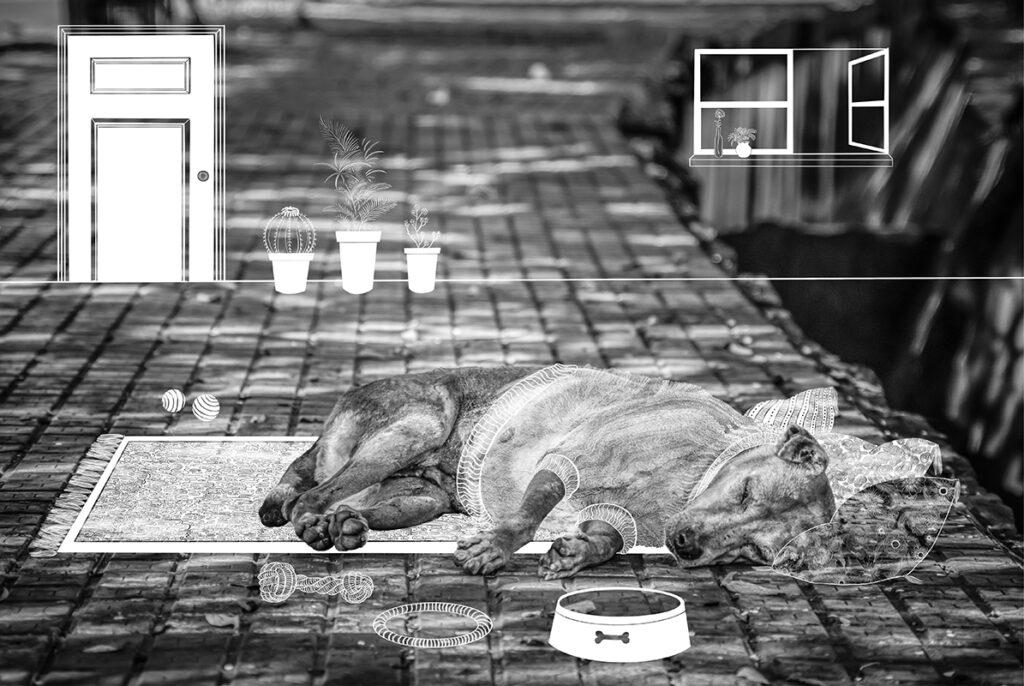 温かいお家と家族を二度と奪わないで。 大切な家族に捨てられる動物がこの世界からなくなるように、人と家族になる動物が温かい家庭で一生を過ごせるように願って描きました。